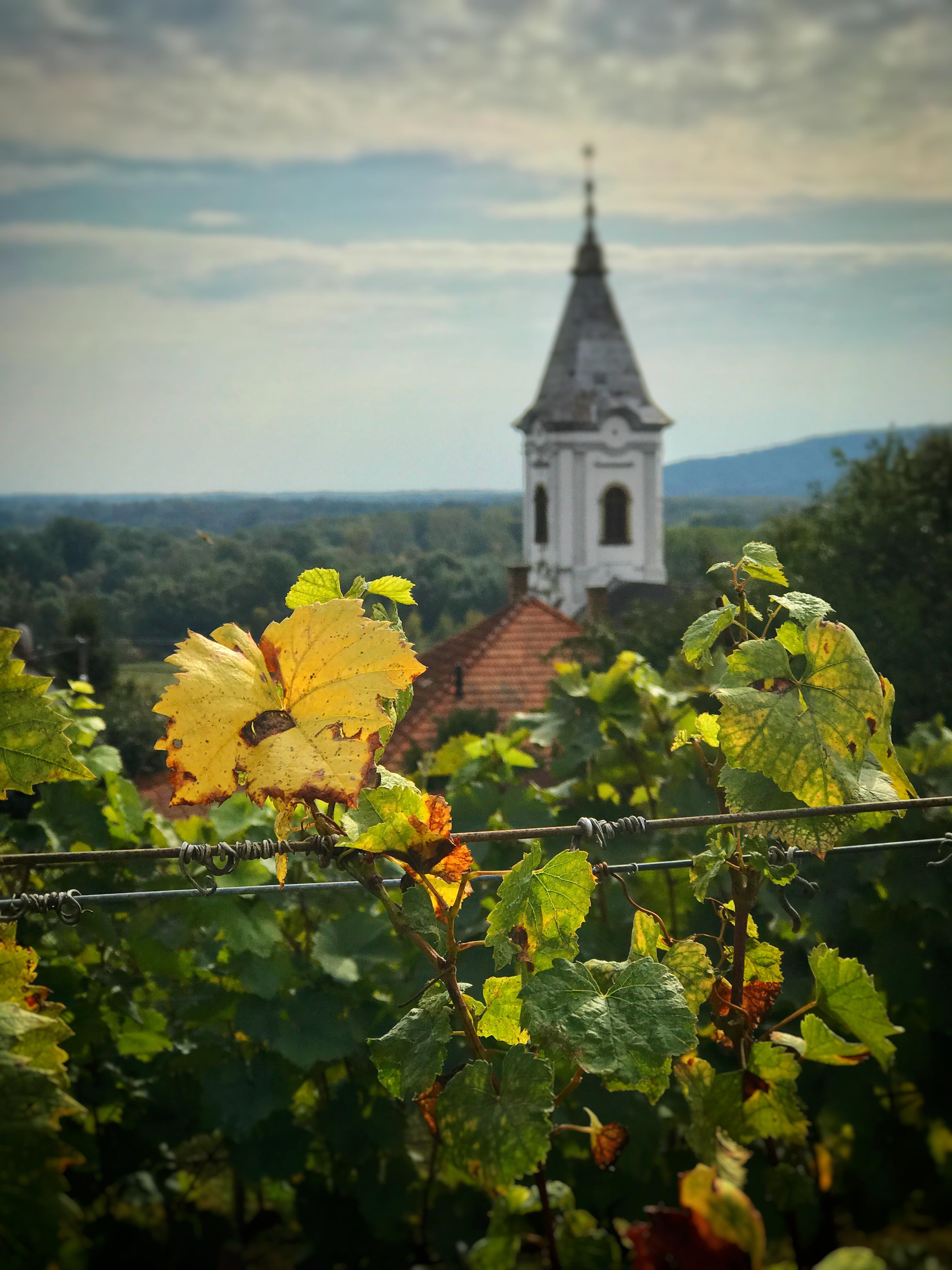 Myydään viinitila unkarista